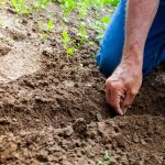 6 Tips for Selling Seeds Online on Local Seeds