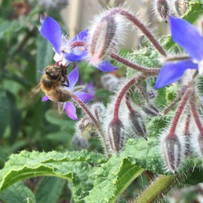 Bee Mix