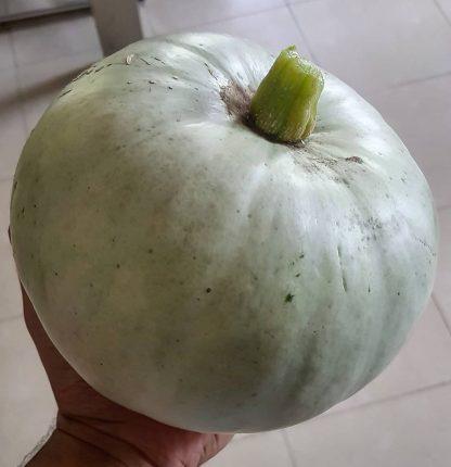 Organic Pumpkin Large Green - Japanese Heirloom