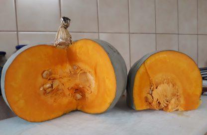 Pumpkin Queensland Blue