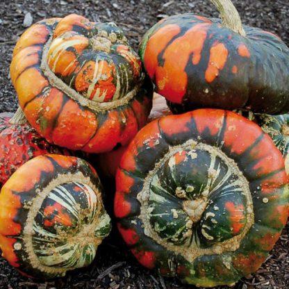 Turk's Turban Pumpkin