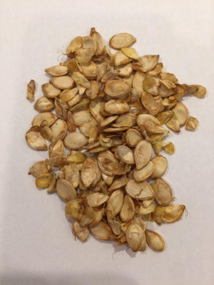 Gem Squash seeds