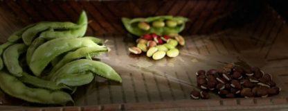 Organic Dolichos Lablab Bean Bush variety / Valor Bean/ Chikkudukaya/ Avarai