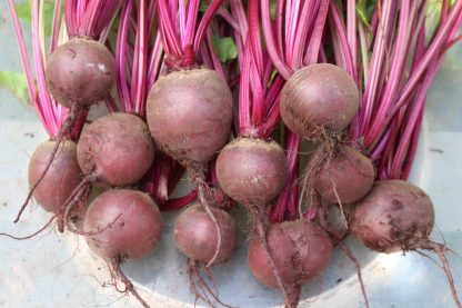 "Beetroot ""Red Globe"""