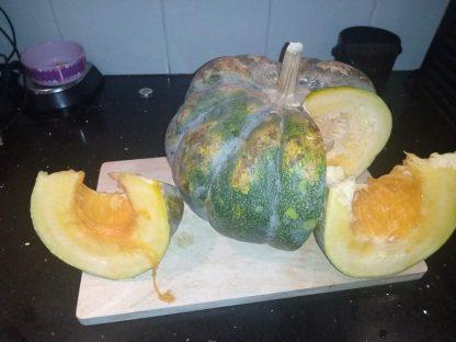 Punjabi White Pumpkin