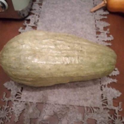 Blue Banana Squash Pumpkin