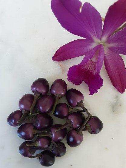 Purple Prince - C. annum.