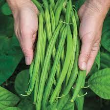 Bush Provider Bean. A2