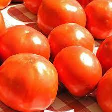 Russian Red Tomato.. F10