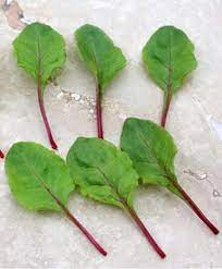 Baby Leaf Beetroot. A14