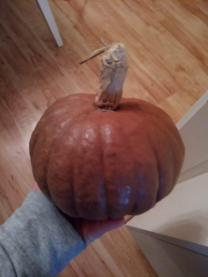 Red/Burgundy Dry Pumpkin