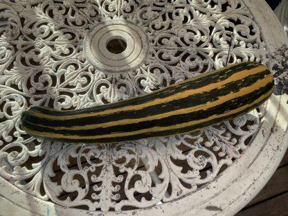 Cocozelle Zuchinni