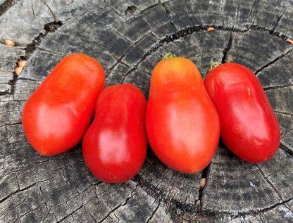 Roma VF Tomato