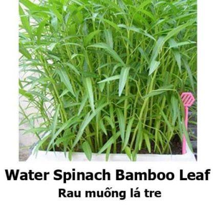 Ong choy / Water Spinach / Kangkong